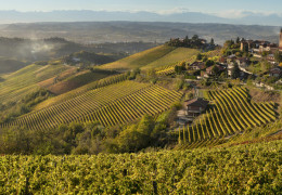 """The Historic Rise of Nebbiolo - Italy's """"King of Wines"""""""
