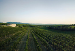 The Super Tuscans: everything you need to know