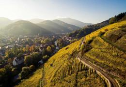 Exploring Alsace's terroir: Clos Windsbuhl versus Clos-Saint-Urbain