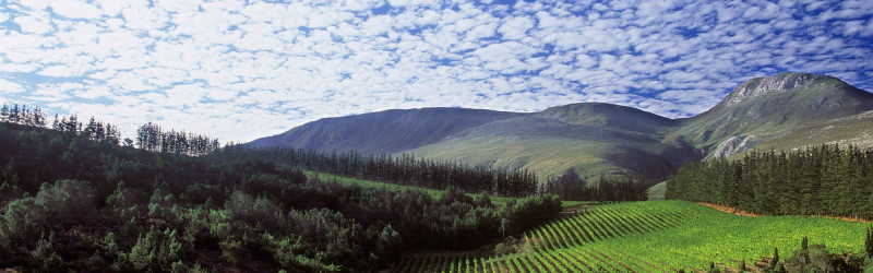Stunning Elgin Chardonnay