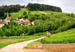 2010 Burgundy: A few early thoughts
