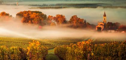Mature Bordeaux
