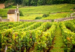 Burgundy 2018 EP Round-Up - F+R's Top 2018 White Wines