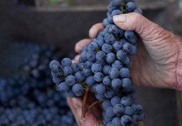 Is climate change threatening the Bordeaux blend?