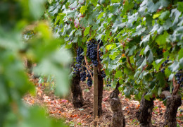 Bordeaux 2020: what the critics are saying