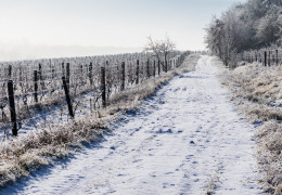What winemakers are drinking this Christmas