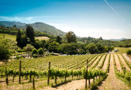 Iconic USA Wines