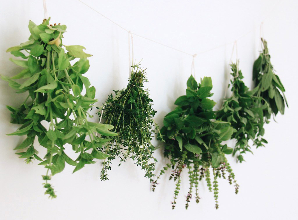 how-to-dry-fresh-herbs1