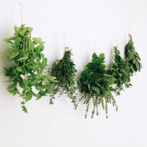 How to Dry & Store Fresh Herbs
