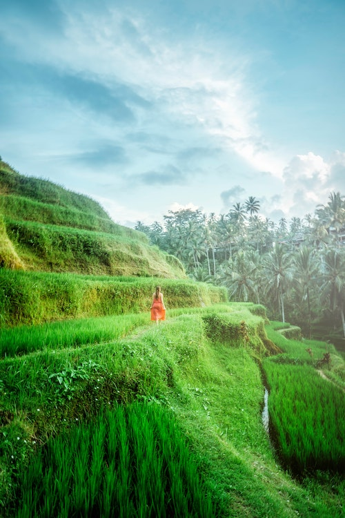 Breathtaking Rice Terraces Article Photo Pexels Resized