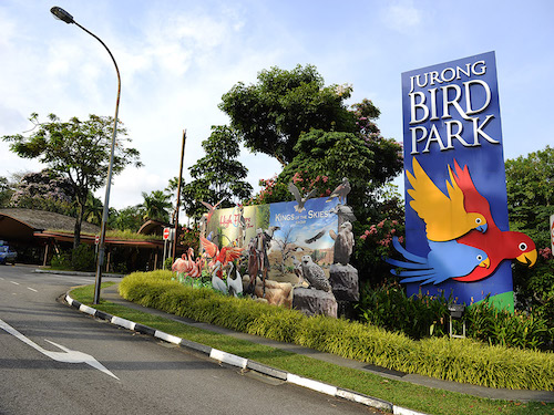 Jurong Bird Park Article Photo Business 2 Resized