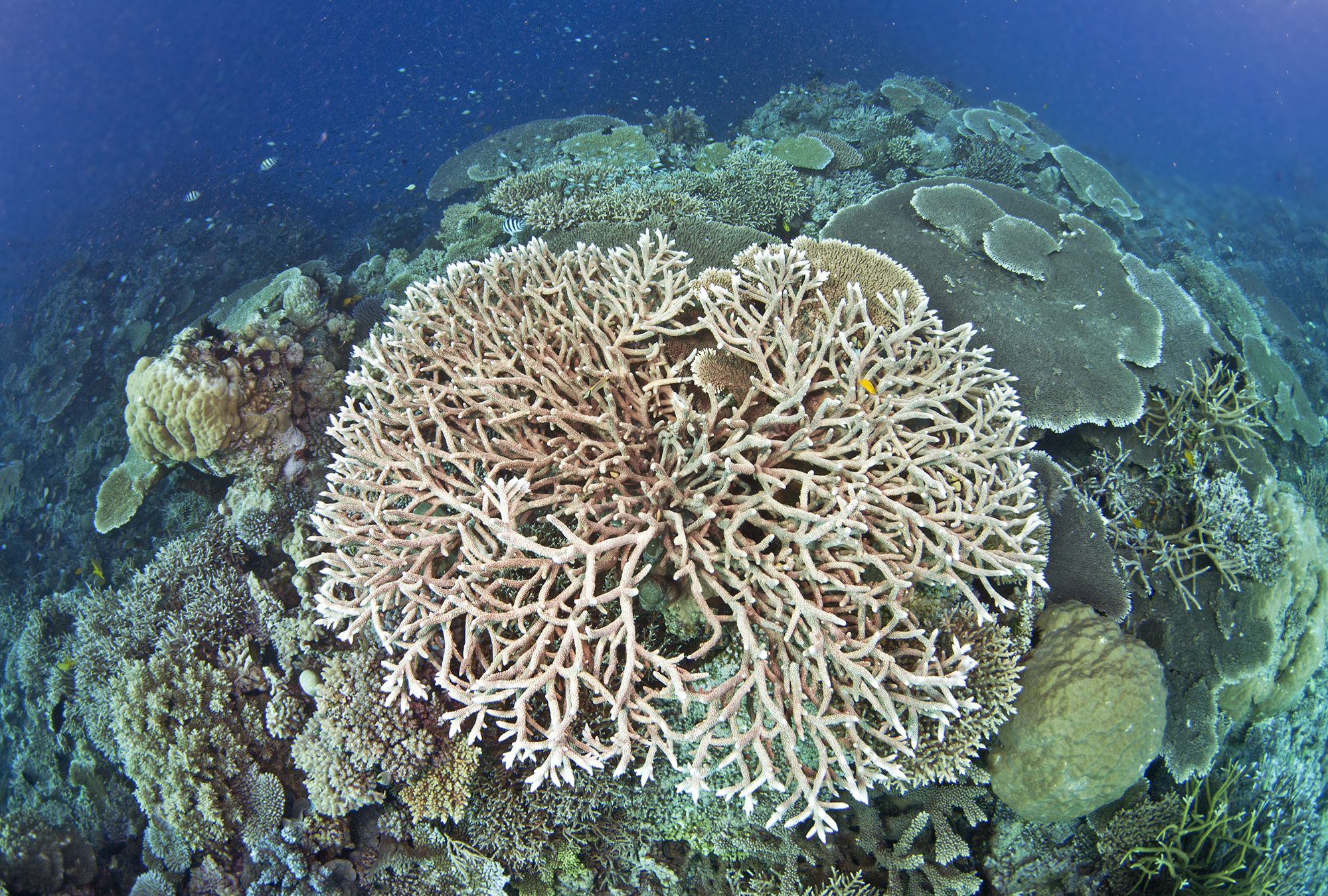 An open letter to Aussie Citizens from the Great Barrier Reef