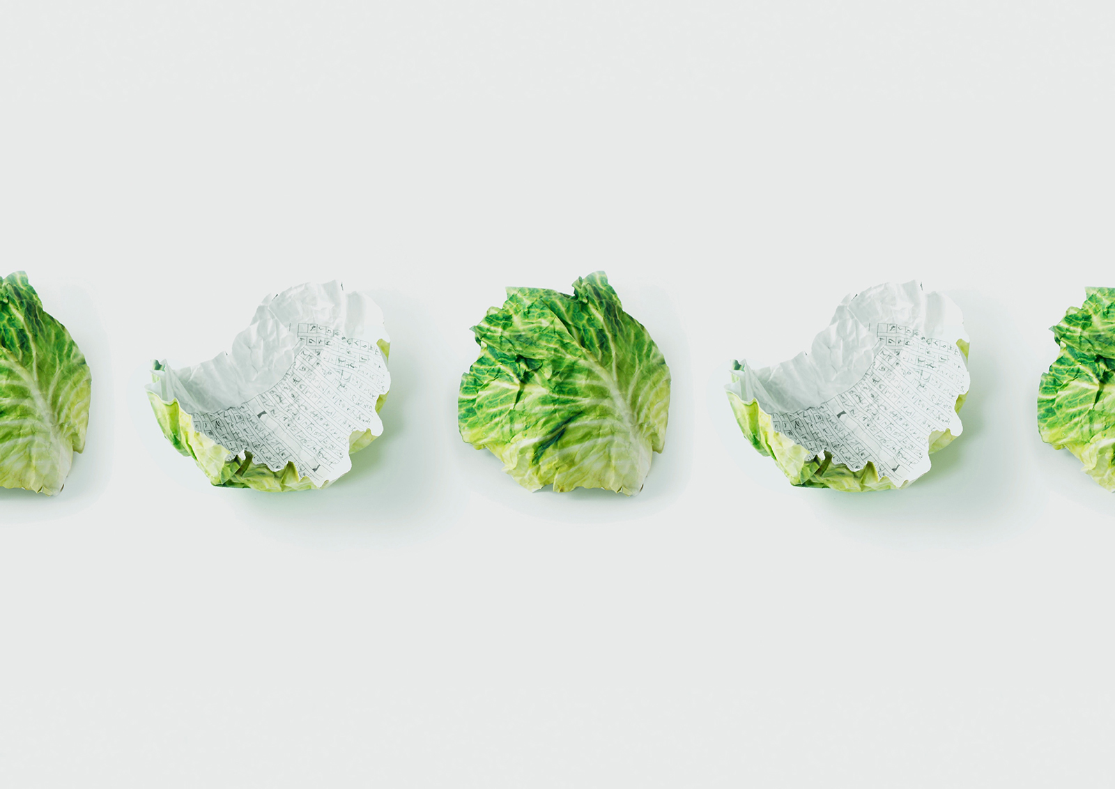 cabbage3