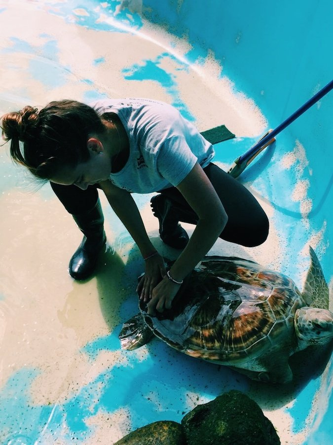 Fernanda cleaning marine turtle at apprenticeship in Brazil