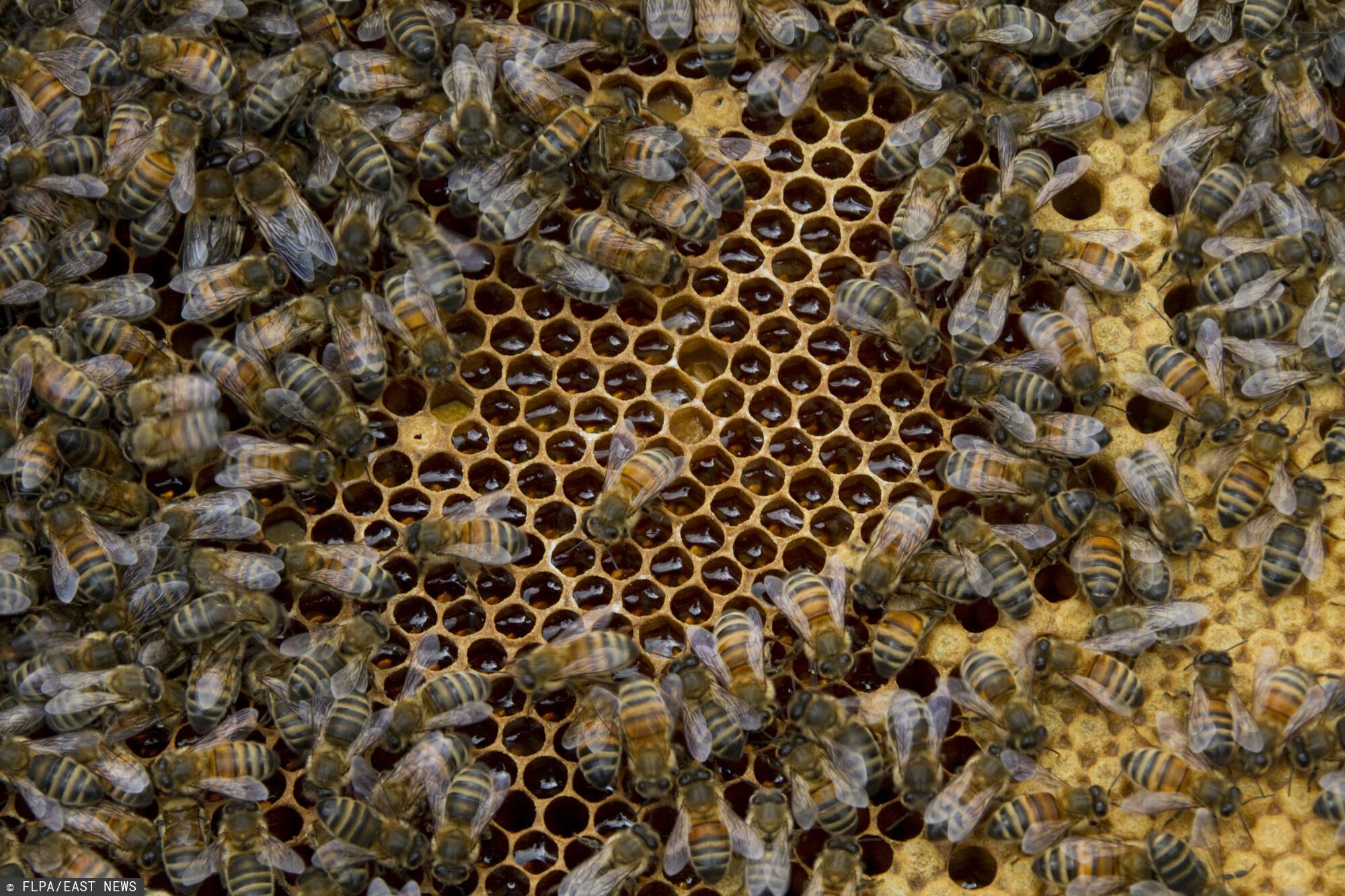 Rolnik - pszczoły