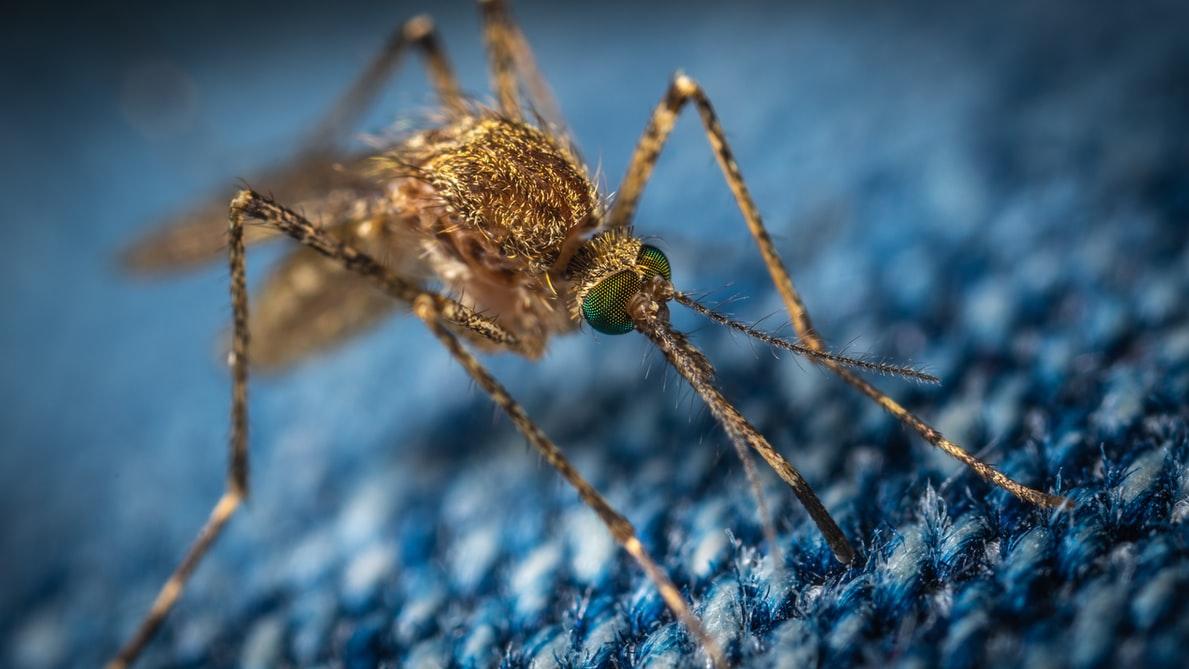 ASF komar