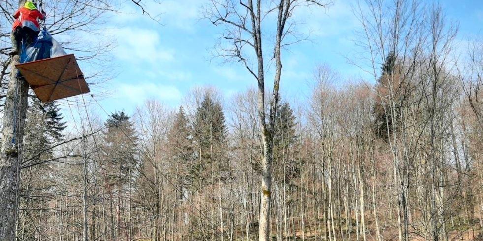 Lasy - blokada wycinki