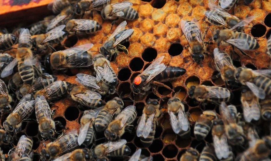 Pszczoły - zalane pasieki