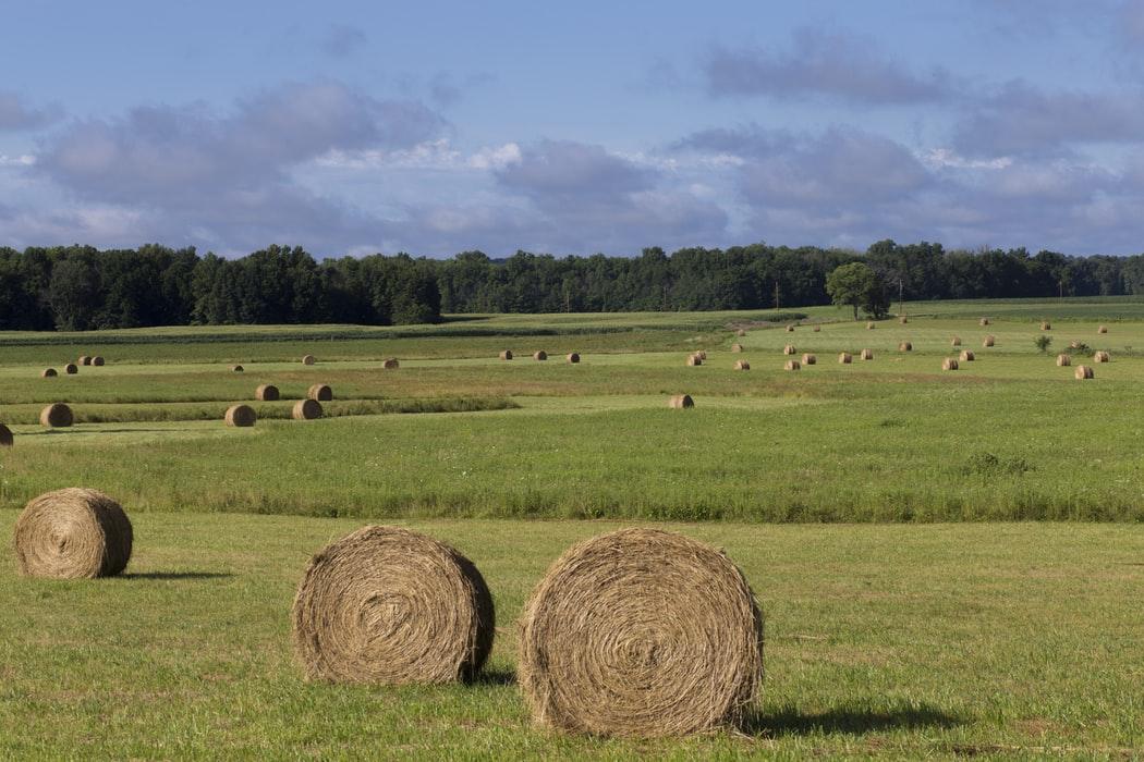GUS spis rolny