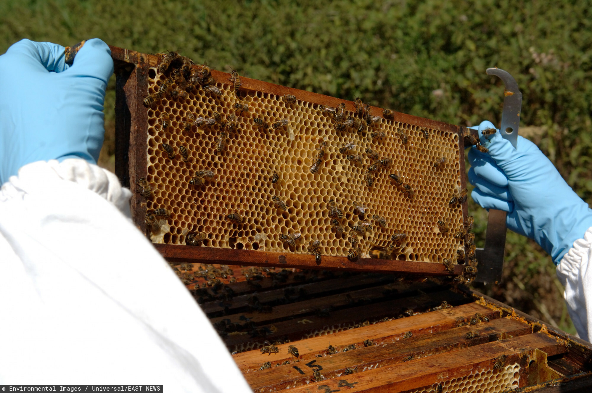 Pszczelarstwo - dodatkowe wsparcie