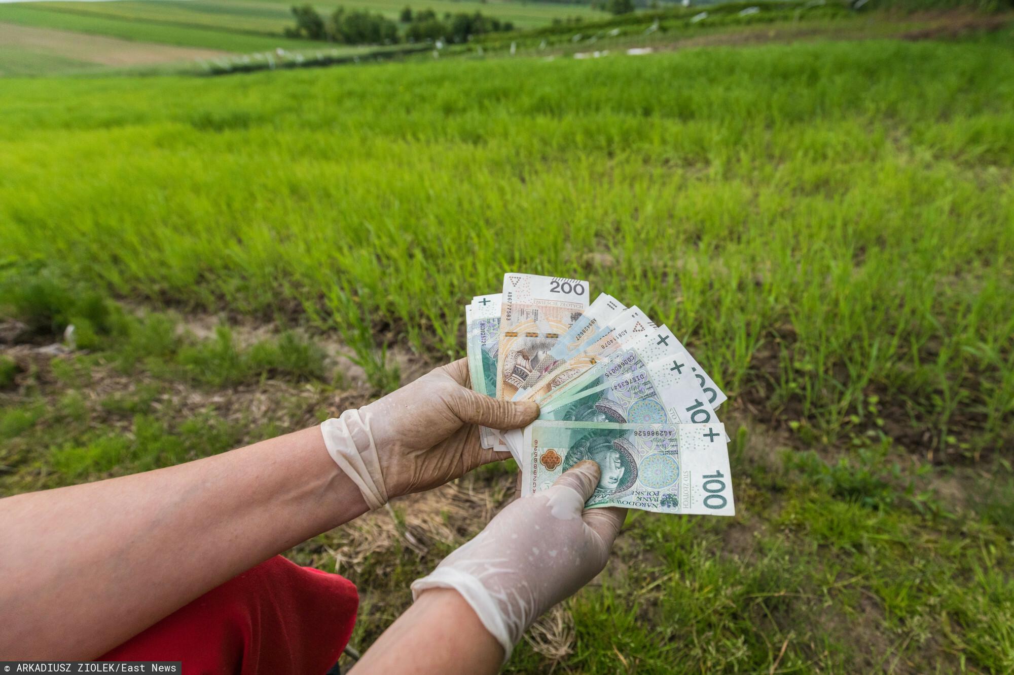 nawóz pieniądze pole