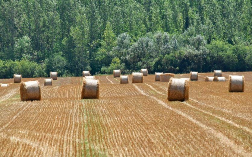Izba rolnicza - dzierżawa
