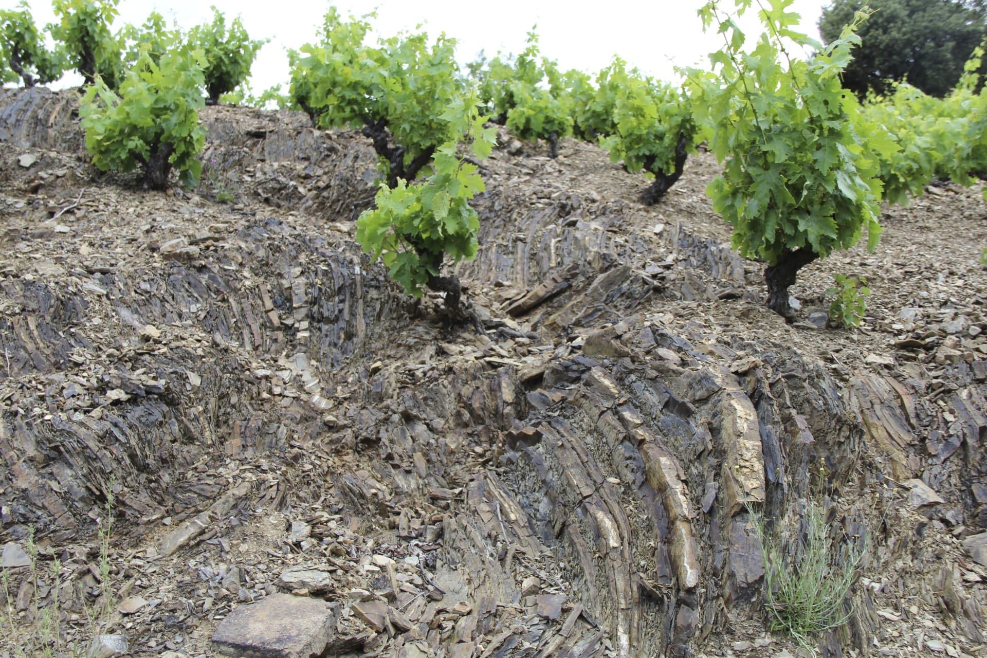 Grenache Fall Wine - Priorat, Spain