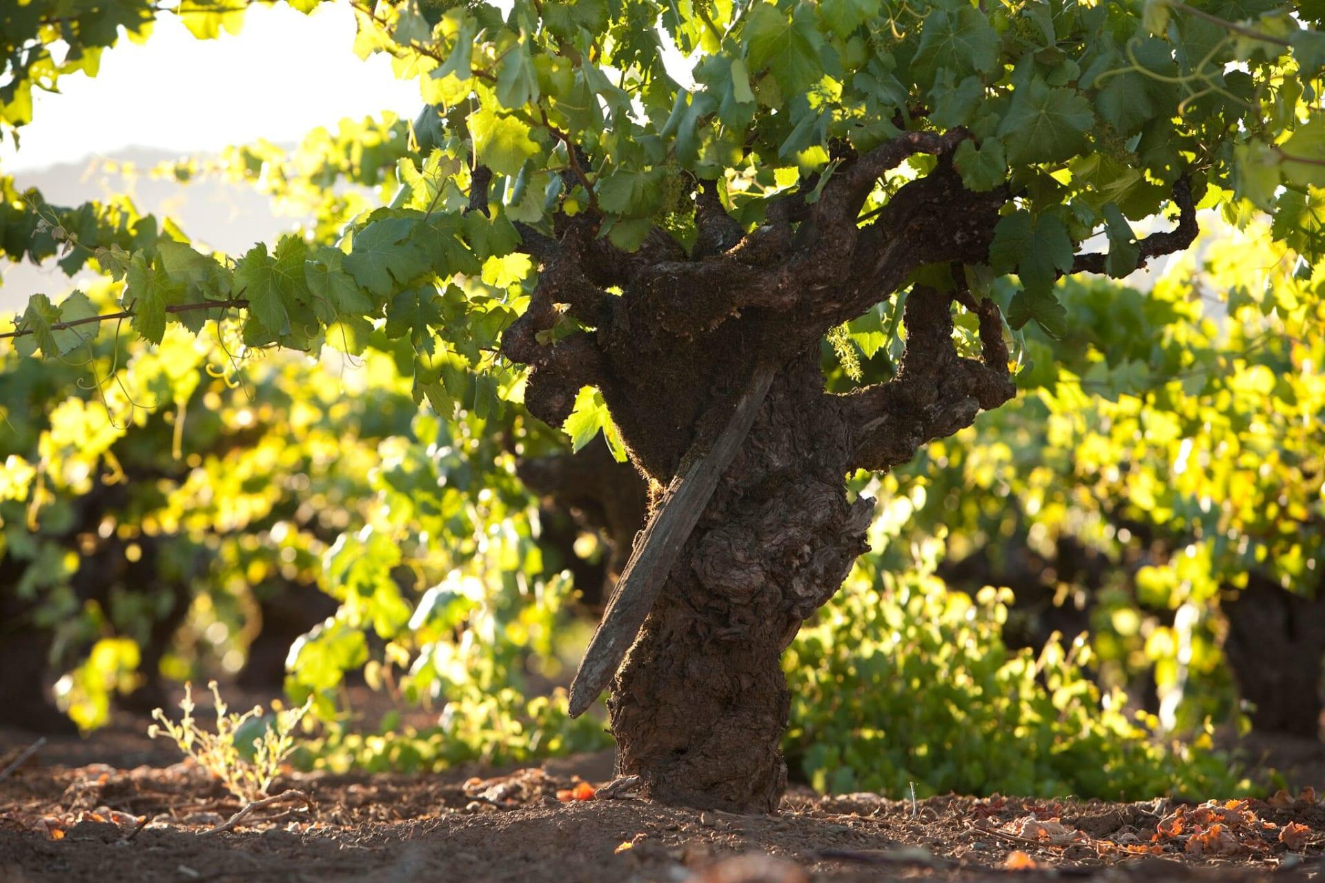 Zinfandel Fall Wine - Sonoma, California