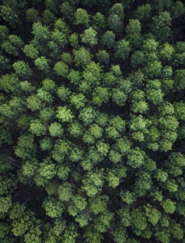 Trees vertical
