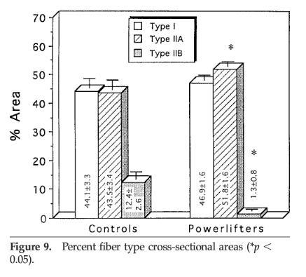 筋繊維の比率