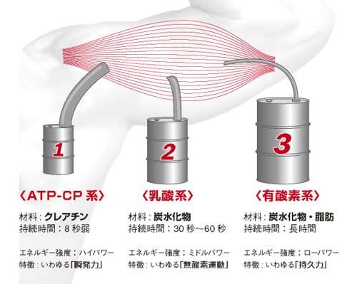 ATP産生経路