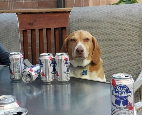 Dog with cans of PBR