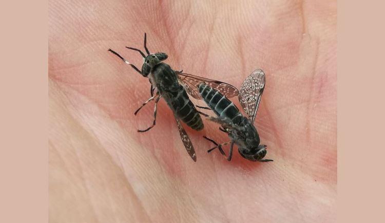 Ostrzeżenie przed plagą owadów