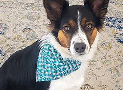 Sew a Sweet Dog Bandana