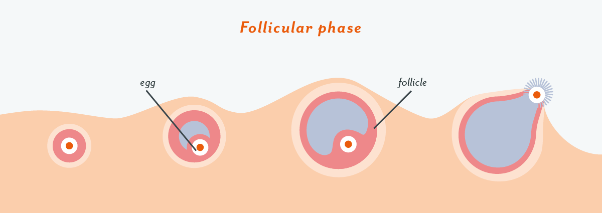 Ovulation Pain: Symptoms, How Common It is, and Why It Happens
