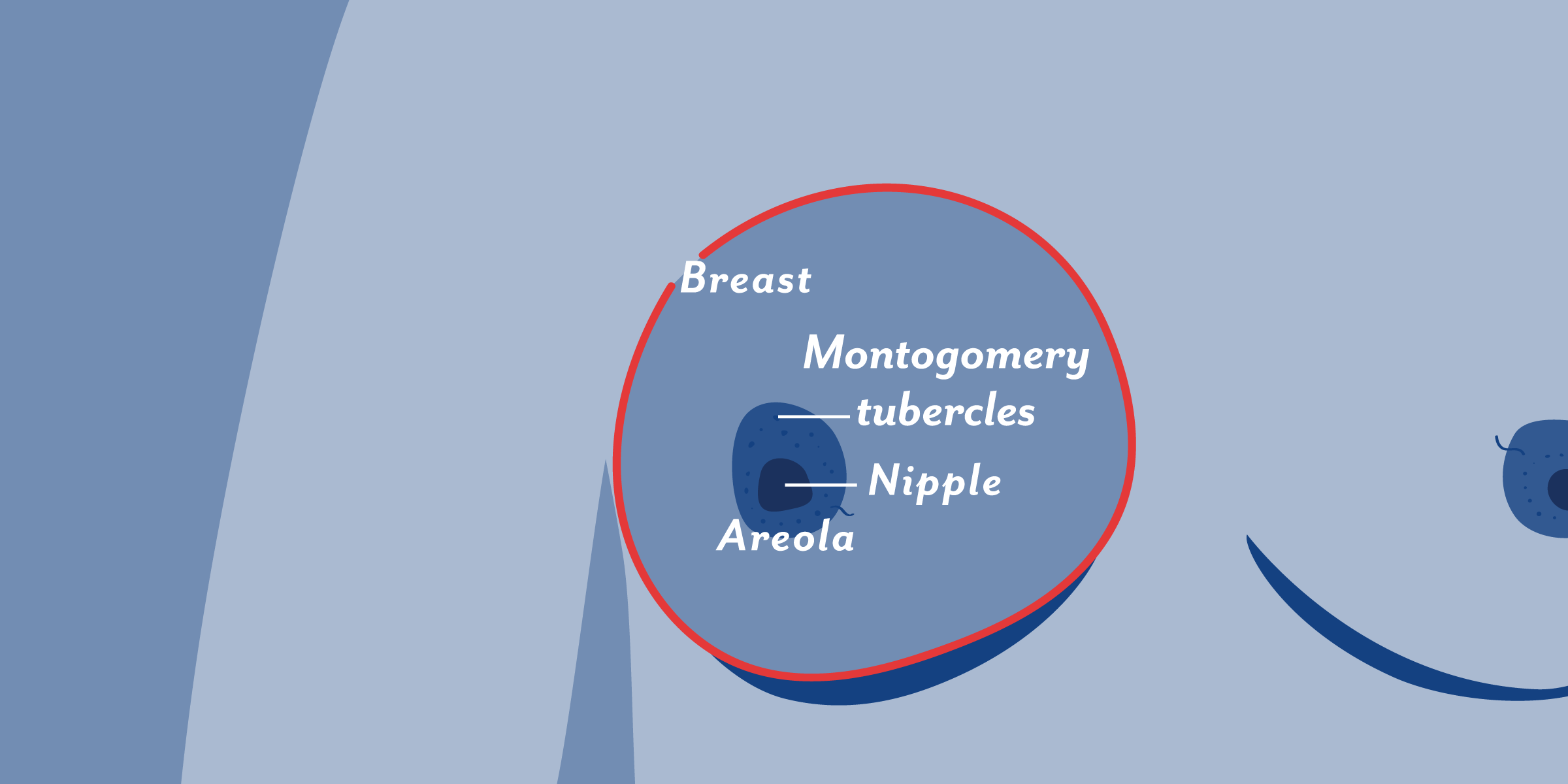 Nipples different types of 13+ Fascinating