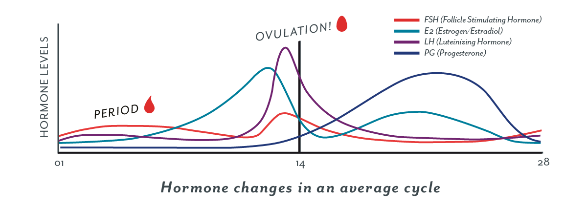 What you may not know about ovulation: questions and