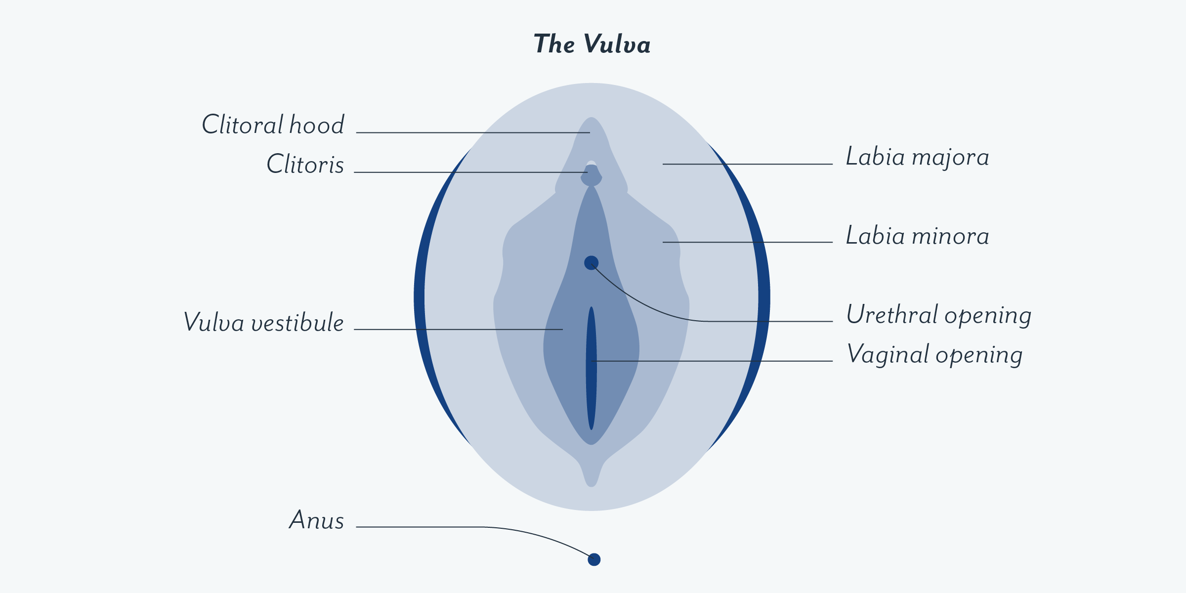 Vulva and vaginas