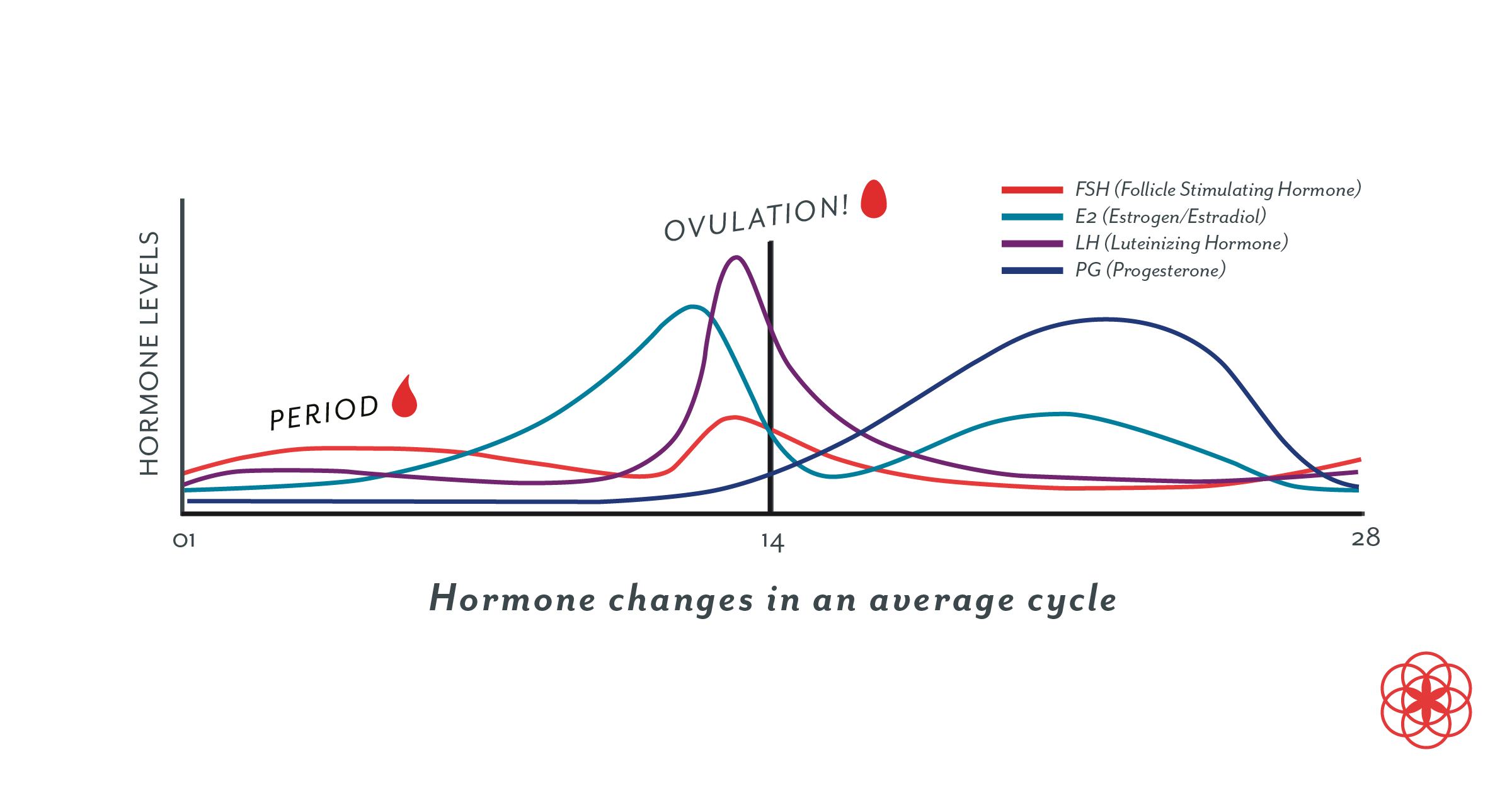male hormone cycle chart