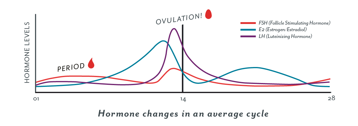 Ovulation: When do I ovulate? Ovulation Symptoms, and More