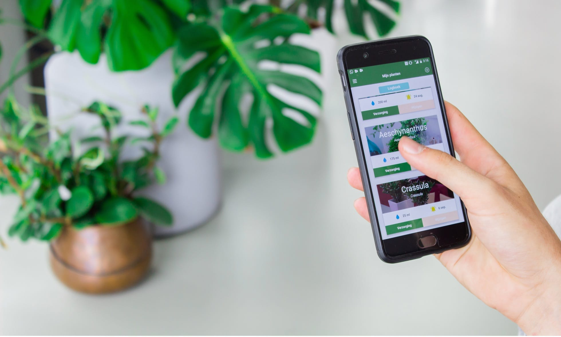 Plantsome's webshop runs on Shopify and integrating Mollie to it was a simple step