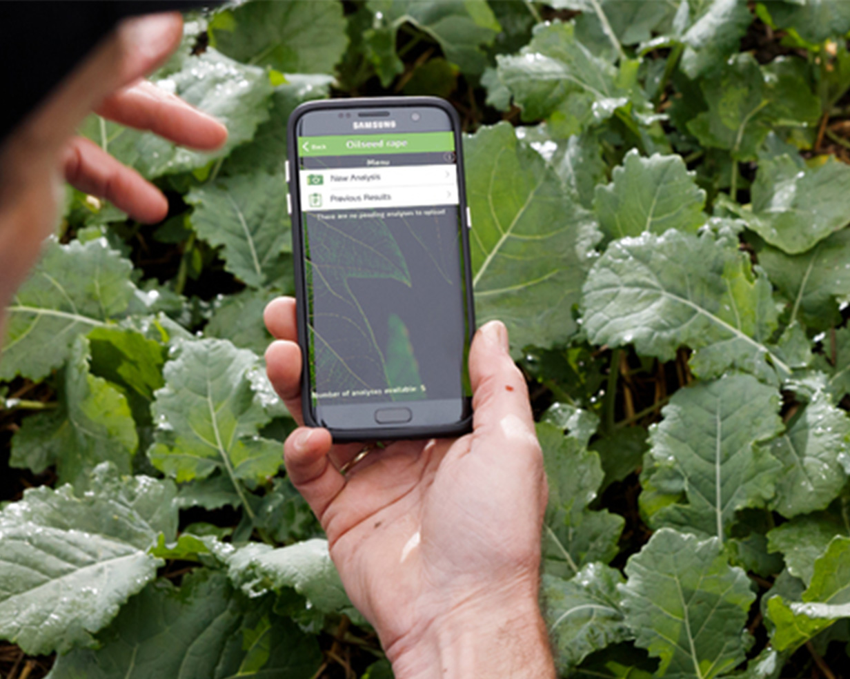 A person holding their phone using the Yara ImageIT app to detect crop deficiencies