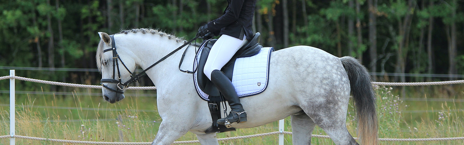 A person in full horse riding uniform riding a white horse