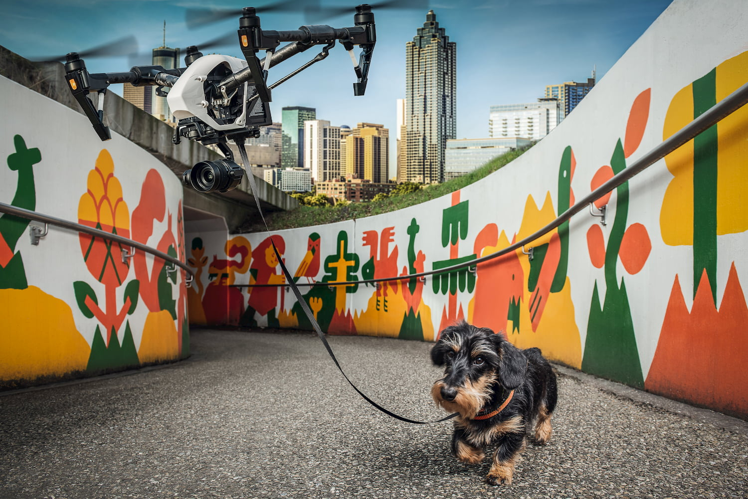 Digital-Experience-dog-with-drone