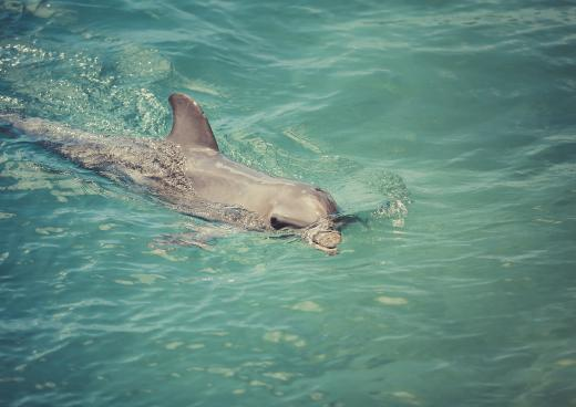 Dolphin Discovery, Tortola, British Virgin Islands
