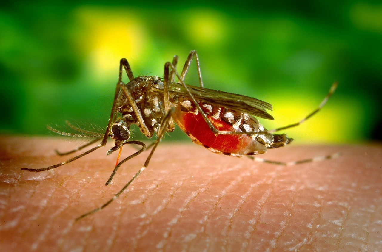 Malaria, Coming Soon to a Country Near You