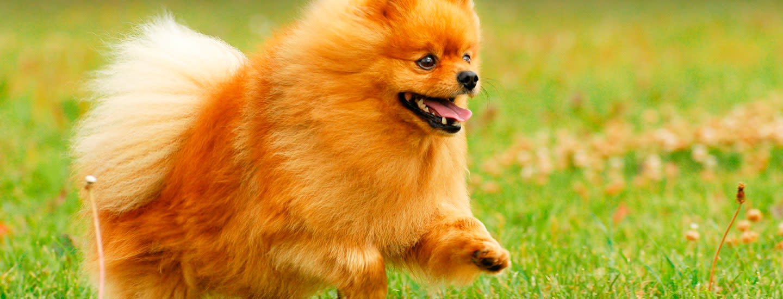 Pirkka Parhaat viljattomat koiranruoat
