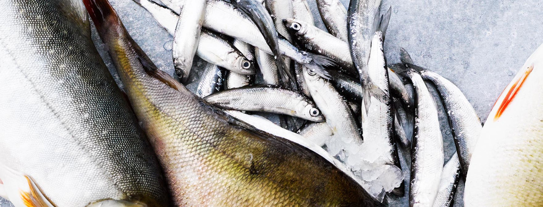 Suosi paikallista kalaa – K-ruokakaupoissa se on takuutuoretta