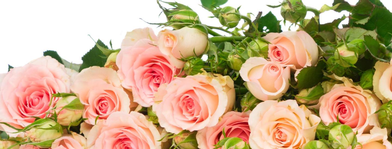 Pirkka-kukkien hoito-ohjeet