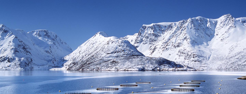 Kalan tarina - Norjan vuonoilta suomalaiseen joulupöytään